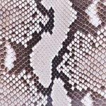 Python Shiny Natural