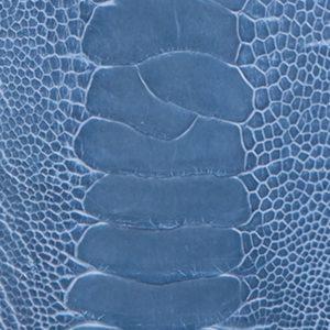 Ostrich leg Clemaris